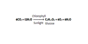 life processes summary note photosynthesis