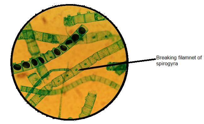 Activity 8.4 Class 10 Science How do Organisms Reproduce Explanation