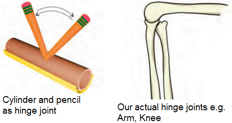 How hinge joint work