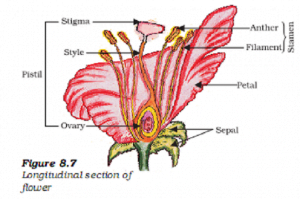 labelled diagram of the longitudinal section of a flower