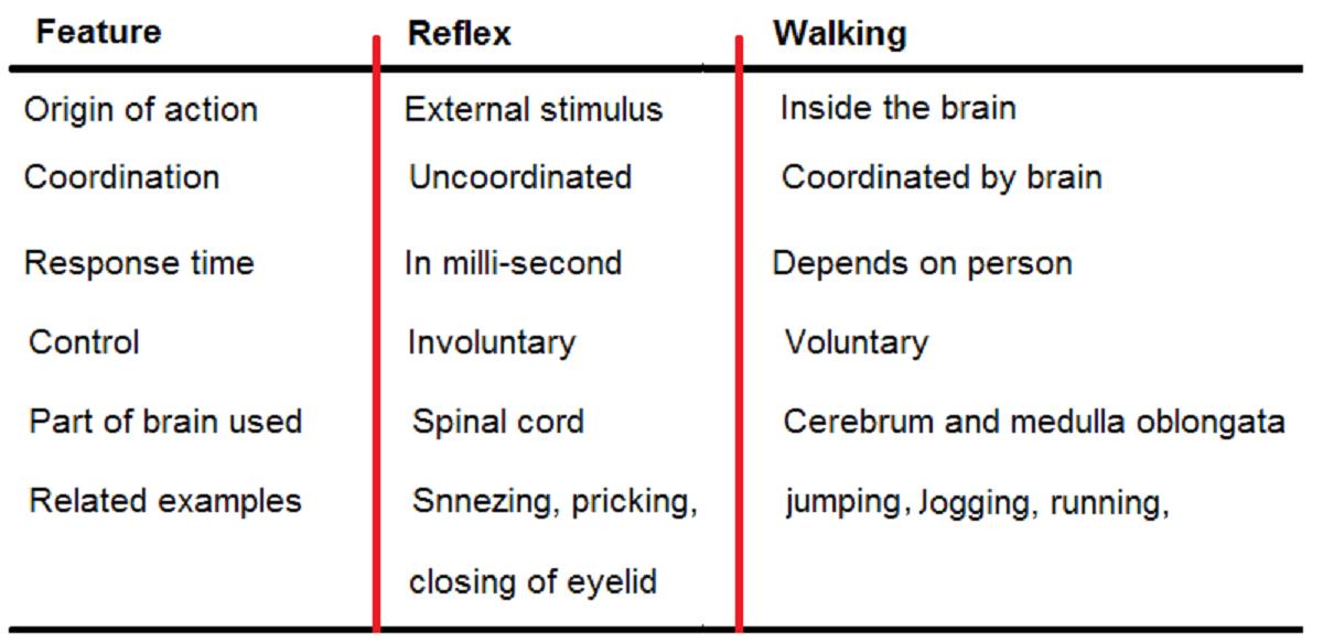 reflex vs walking difference