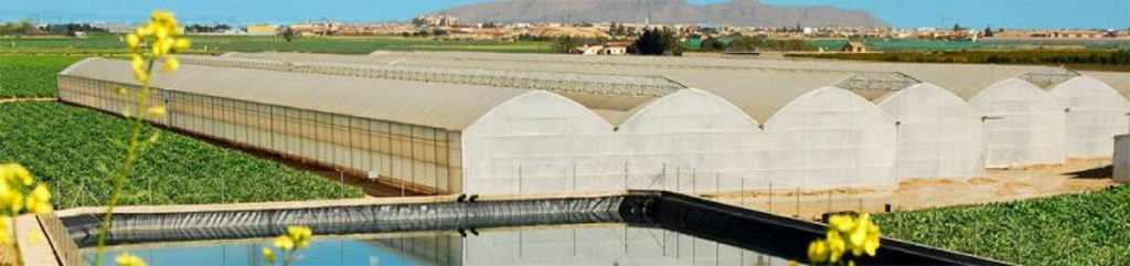 farmers grow fruits vegetable crops inside large greenhouses