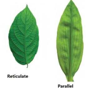 Morphology of flowering plants solution