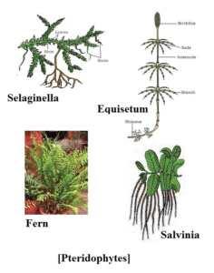 Plant kingdom question answer